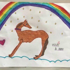 Viola – Levriero Griselli